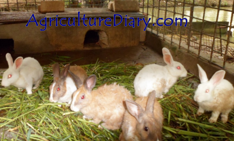 Rabbit Farming: Required Facilities for Rabbit Farming