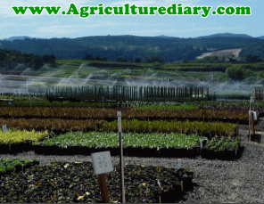 The Importance Functions of Water in Plants – Agriculture Crop